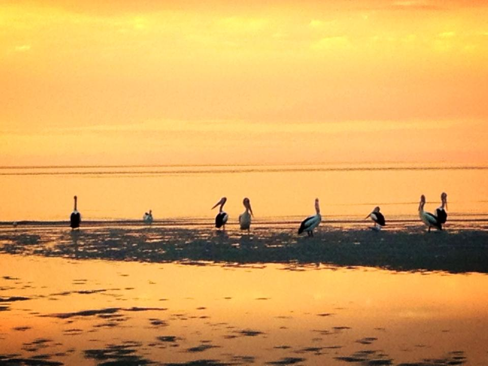 burrum_heads_beach_pelicans